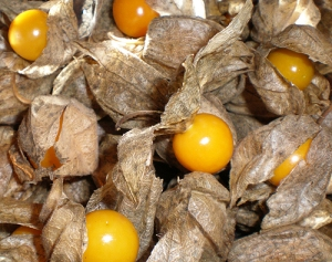 Cape gooseberries