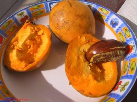 Eggfruit, mijn nieuwste ontdekking. Verrukkelijk.